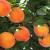Peaches For Easy Peach Wine Recipe